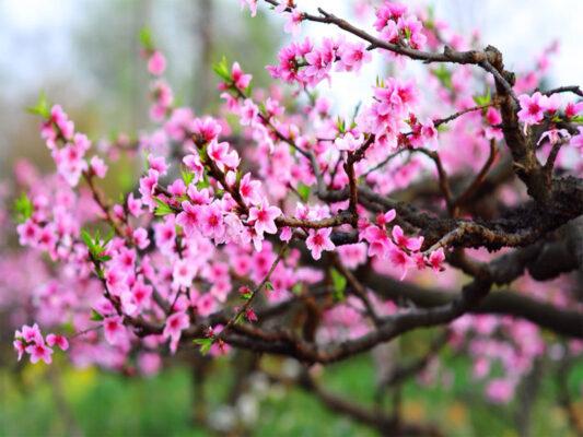 15 loại hoa cây cảnh trưng tết mang tài lộc cho gia chủ năm 2021